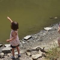 Jabalíes en nuestra excursión al pantano de Vallvidrera