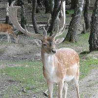 Visitamos un parque de animales en Alemania